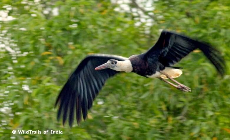 Attiveri Bird Sanctuary [The WildTrails of India app is the best way to get all the details about Indian wildlife sanctuaries (best travel times, safari details, animal sightings, forest accommodations pairing, wildlife related activities, prices, etc). Learn more about WildTrails of India here.]