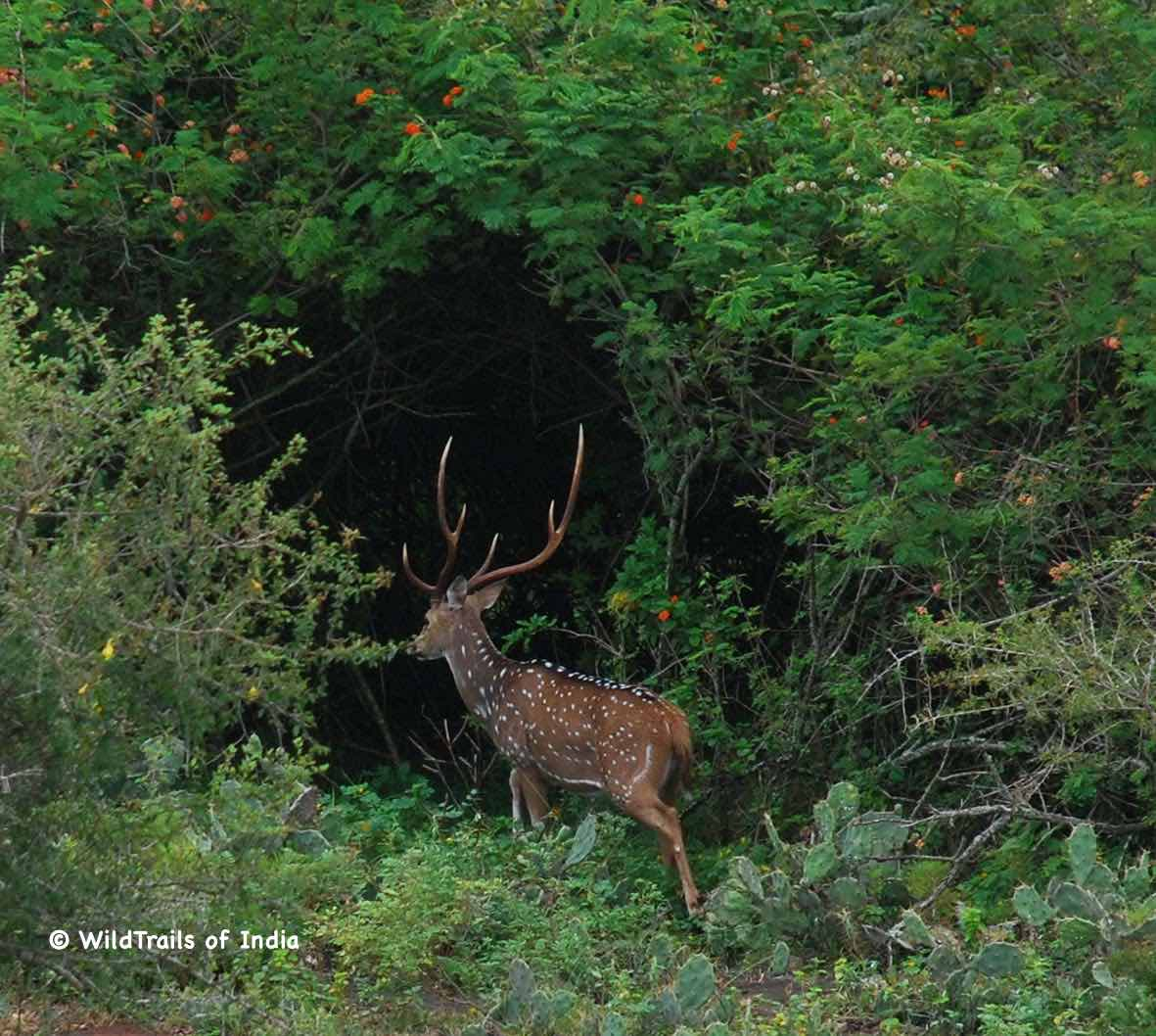 """Begur Wayanad Forest Reserve. WildTrails of India - """"One Stop Destination for all Indian Wildlife Enthusiasts"""""""