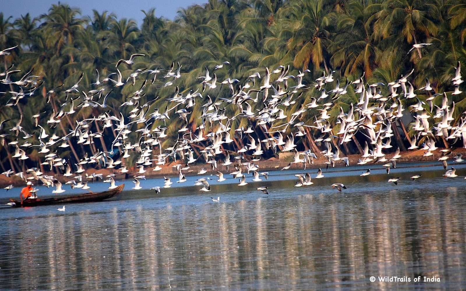 """Kadalundi Bird Sanctuary. WildTrails of India - """"One Stop Destination for all Indian Wildlife Enthusiasts"""""""