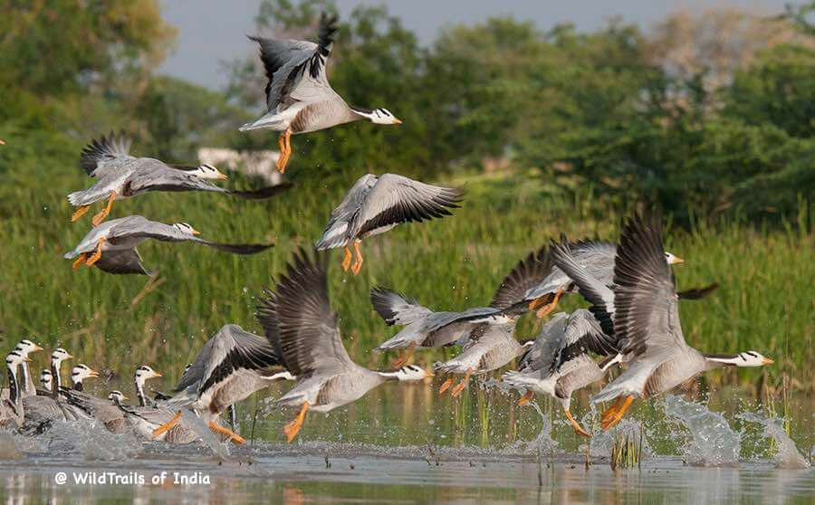Magadi Bird Sanctuary, [The WildTrails of India app is the best way to get all the details about Indian wildlife sanctuaries (best travel times, safari details, animal sightings, forest accommodations pairing, wildlife related activities, prices, etc). Learn more about WildTrails of India here.]