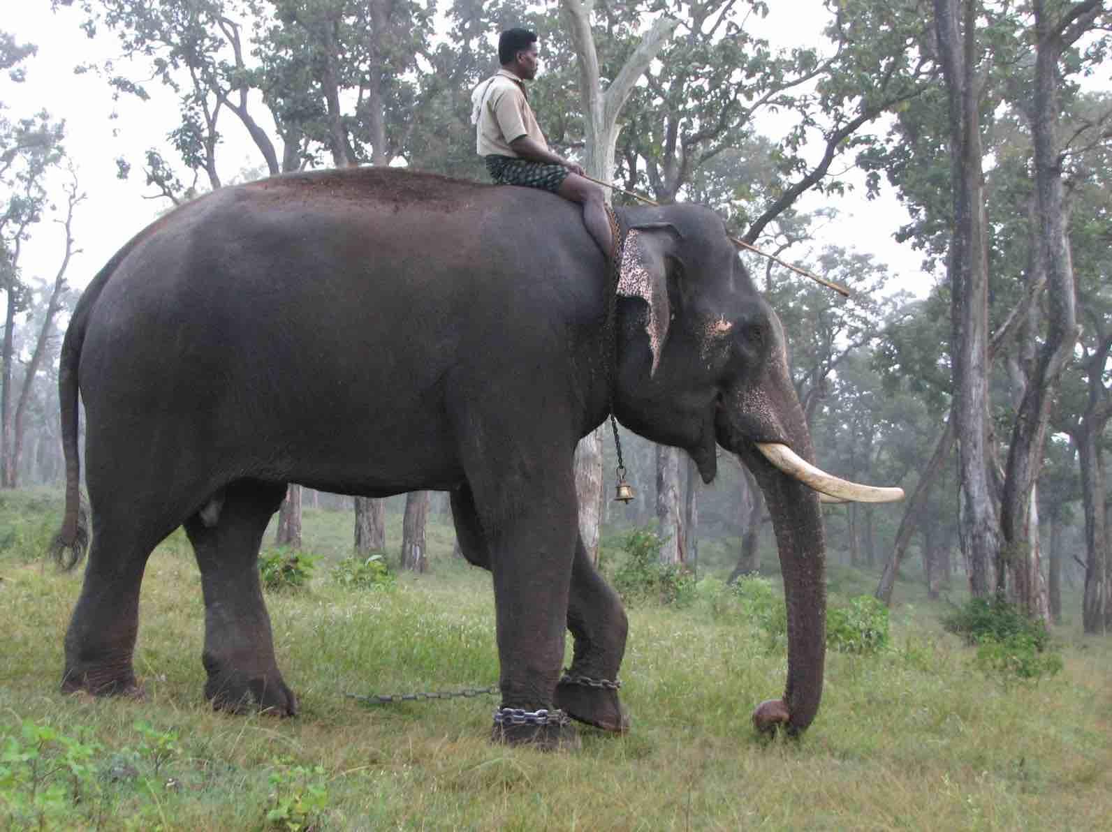 Pambadum Shola National Park. Wildtrails of India