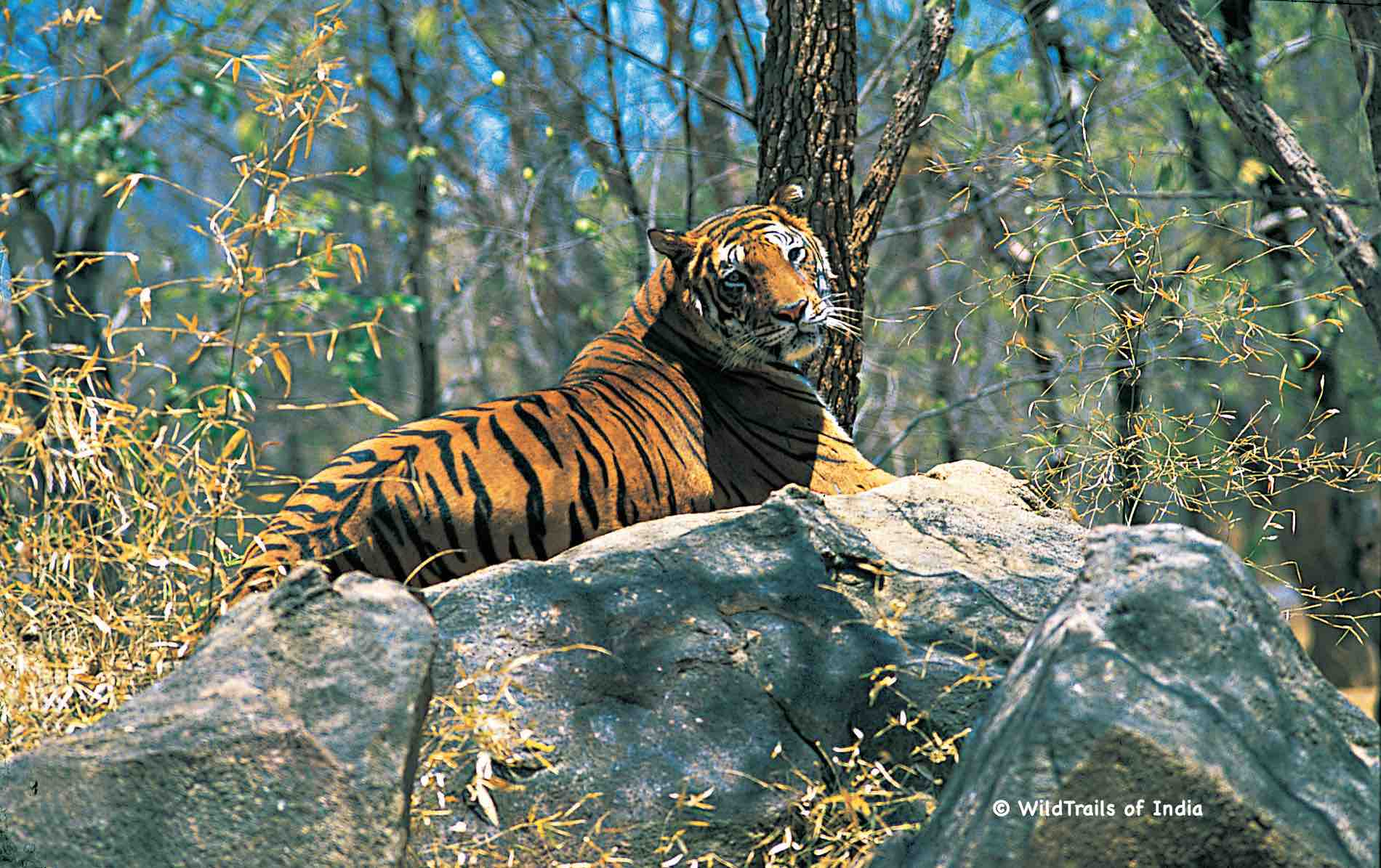 "Parambikulam Wildlife Sanctuary. WildTrails of India - ""One Stop Destination for all Indian Wildlife Enthusiasts"""