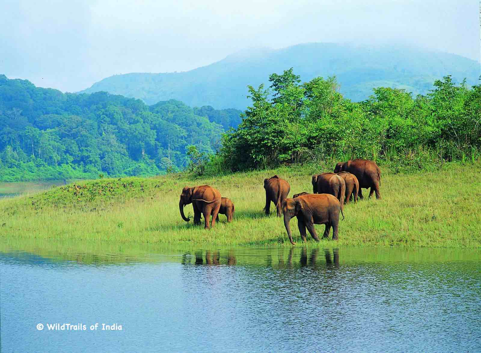 "Periyar Wildlife Sanctuary (Periyar Tiger Reserve, Periyar National Park, Thekkady Wildlife Sanctuary). WildTrails of India - ""One Stop Destination for all Indian Wildlife Enthusiasts"""
