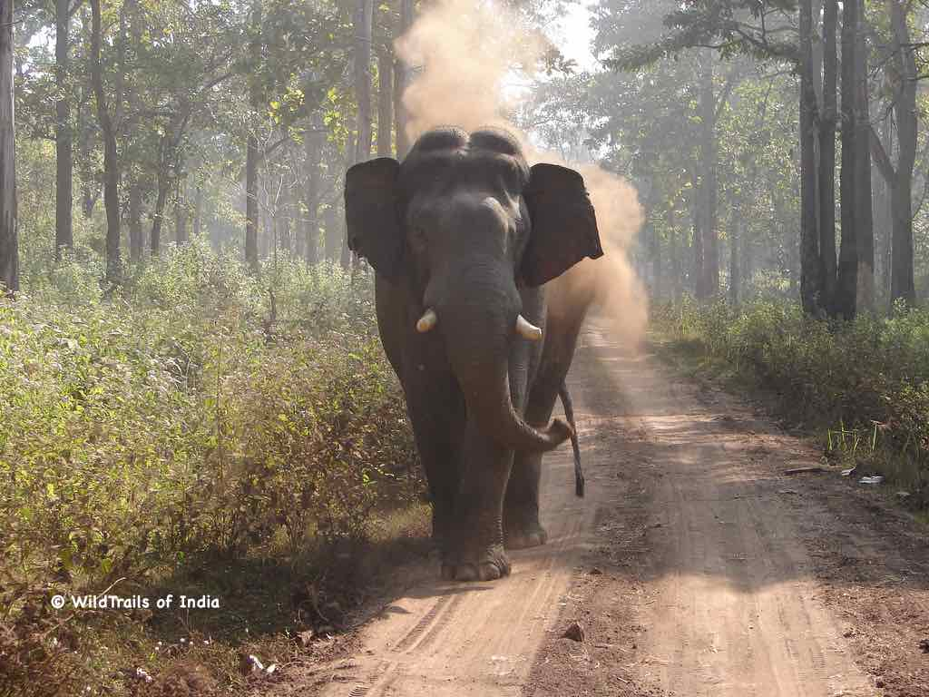 """Tholpetty Wayanad Wildlife Sanctuary. WildTrails of India - """"One Stop Destination for all Indian Wildlife Enthusiasts"""""""
