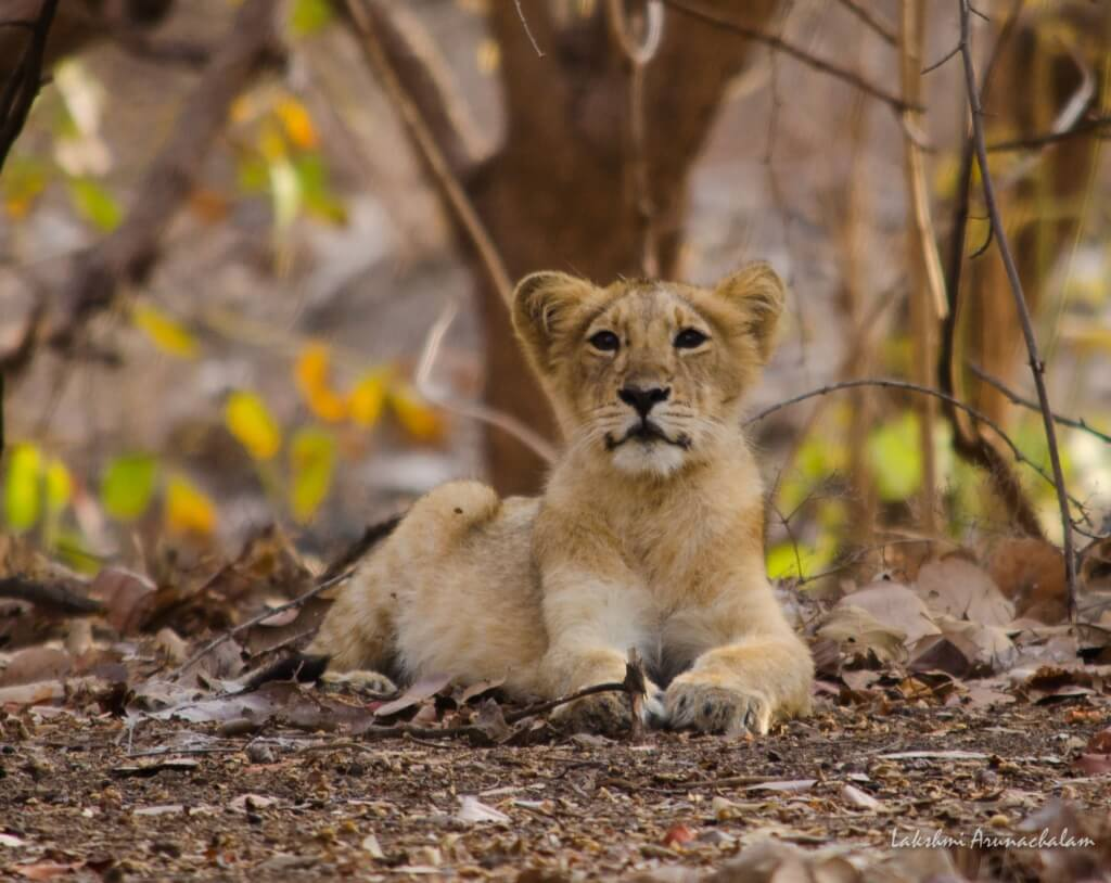 Wildlife sanctuaries & national parks of Gujarat