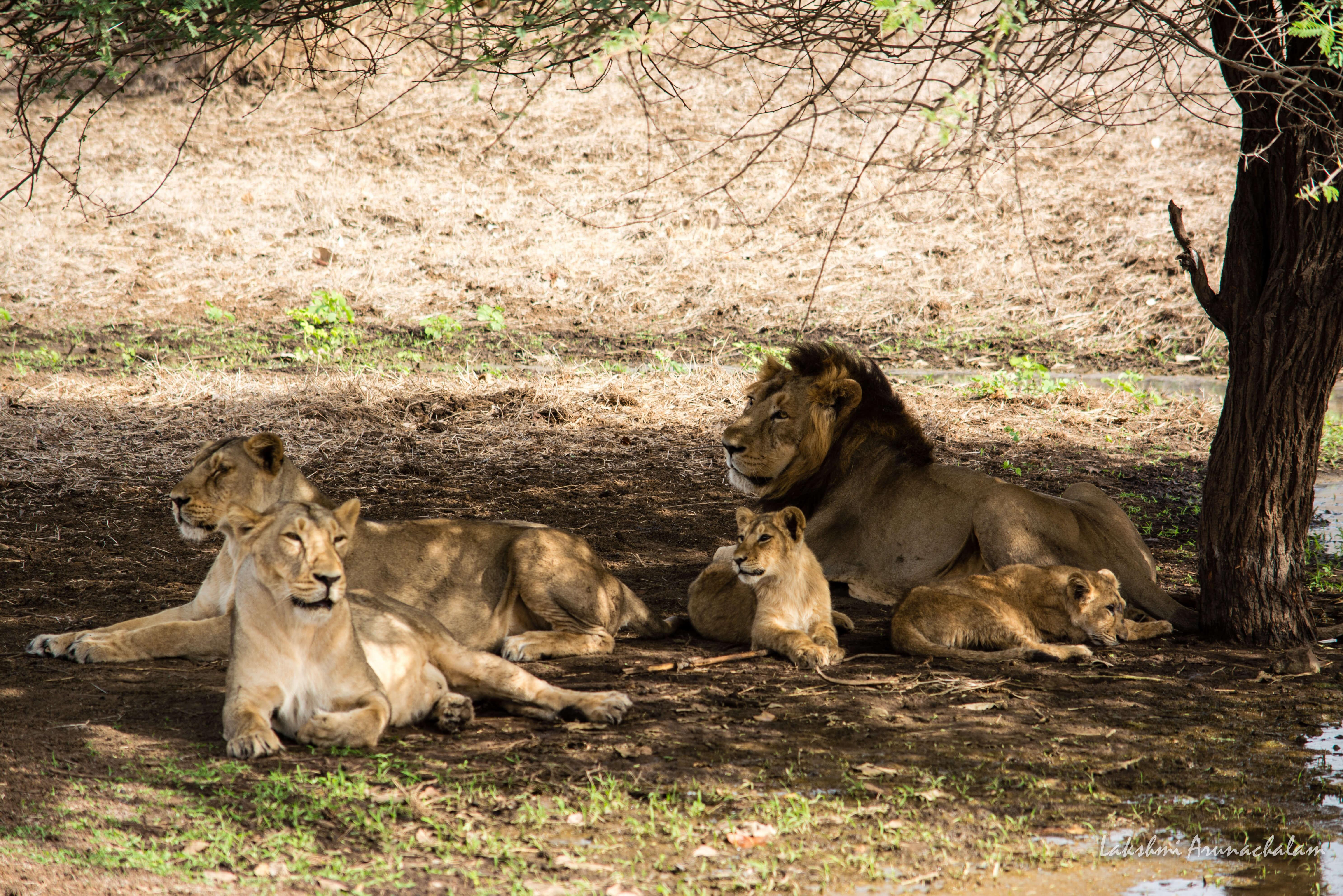wildlife sanctuaries and national parks of gujarat