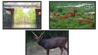 Wildlife Sanctuaries in Jharkand