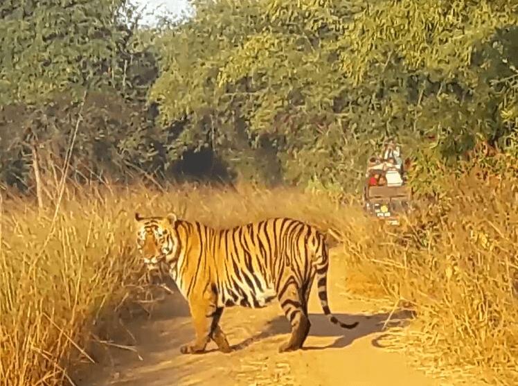 Tadoba Anderi Tiger Reserve