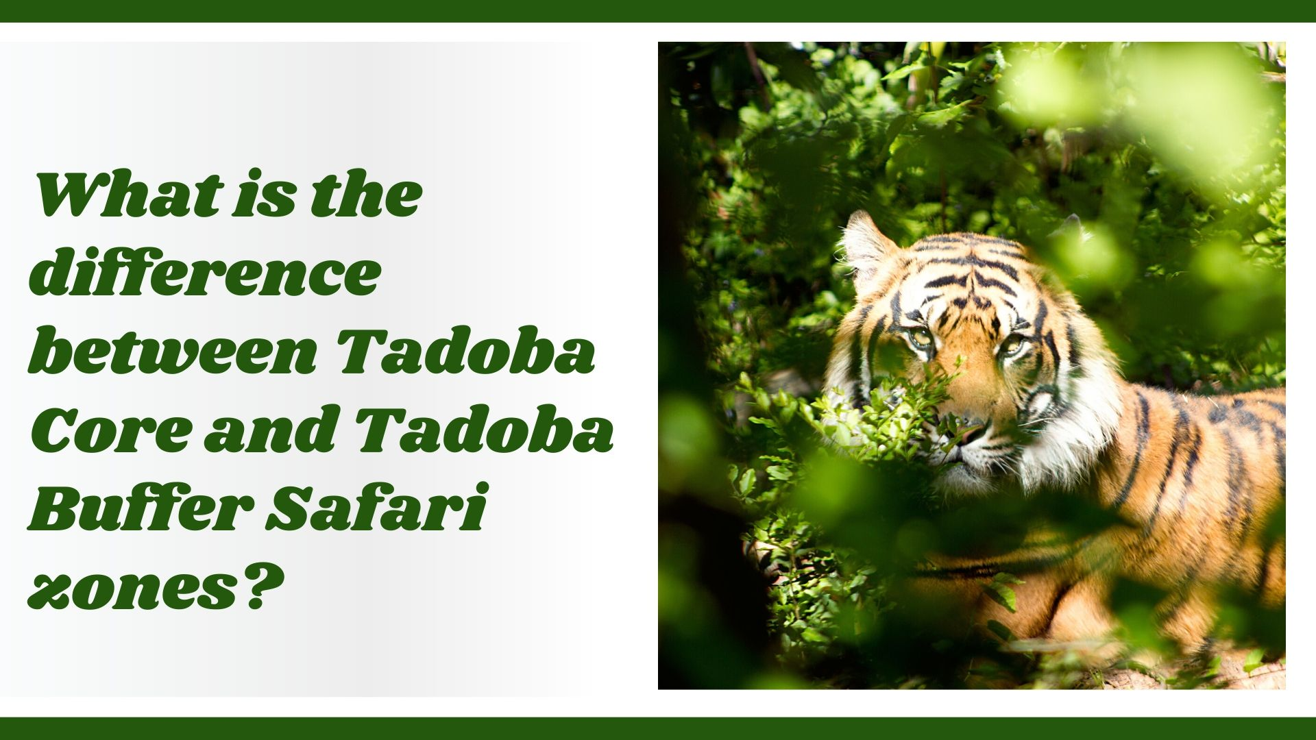 Tadoba budder and core zone