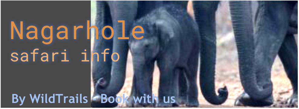 nagarhole safari info