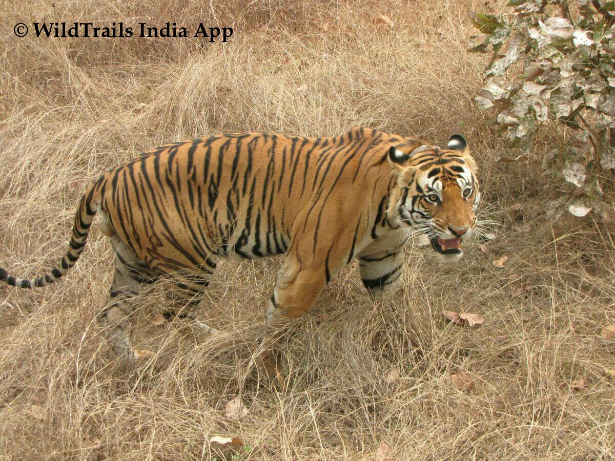 First Time Kanha Visitors