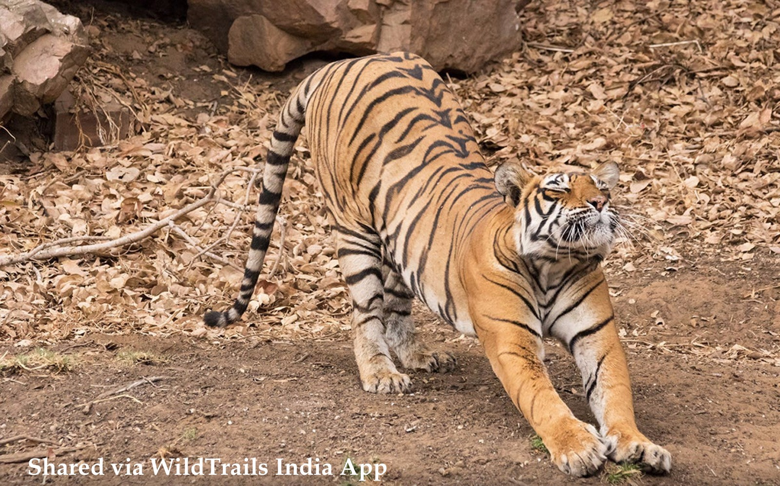 Frequently Asked Questions about Kanha Safari