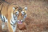 First Time Tadoba