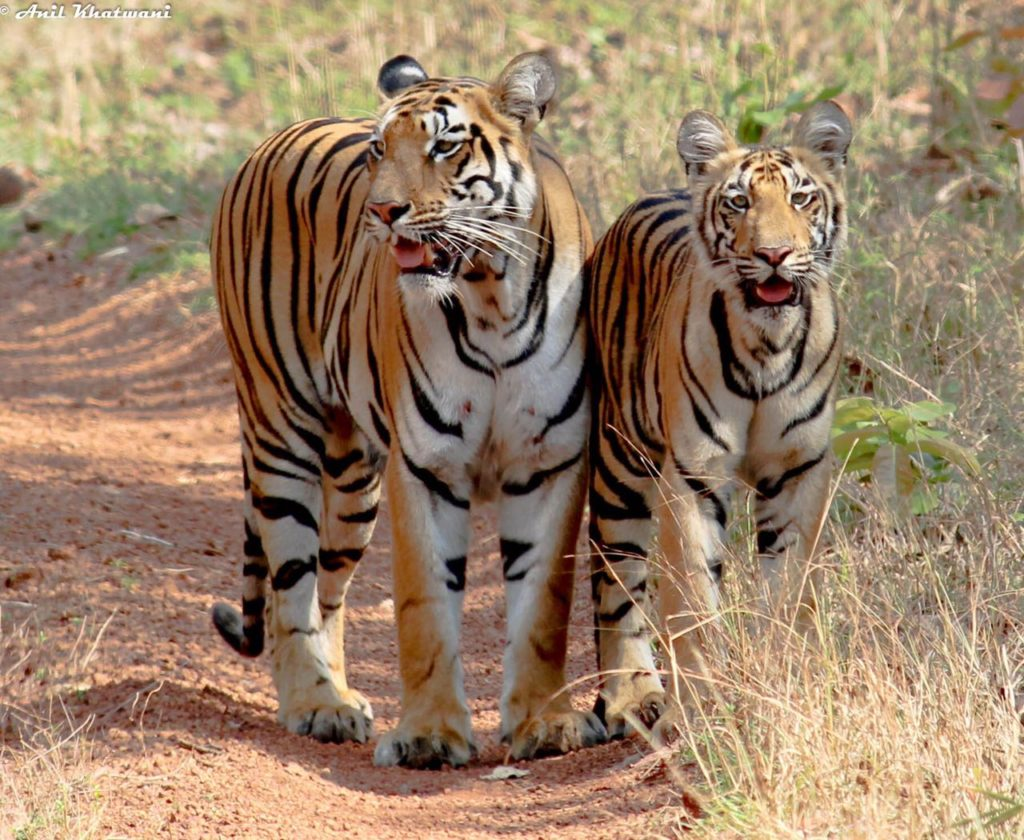 right Tadoba safari gate