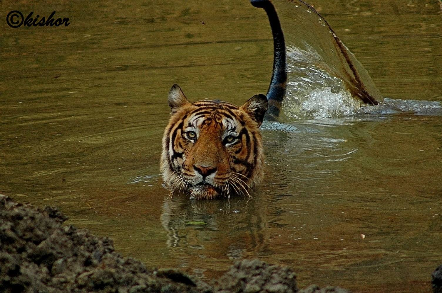top 5 tiger reserves near bangalore
