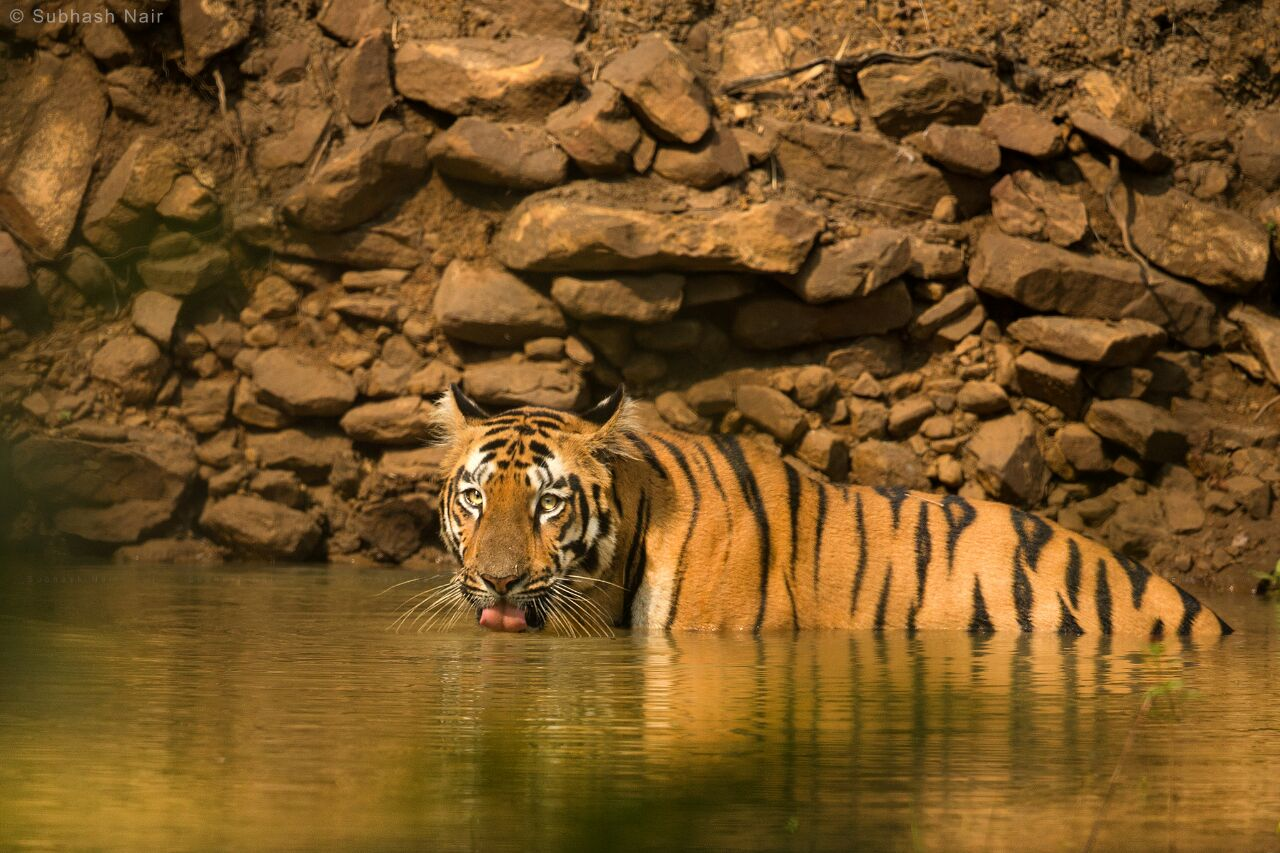 top 5 india's tiger reserves