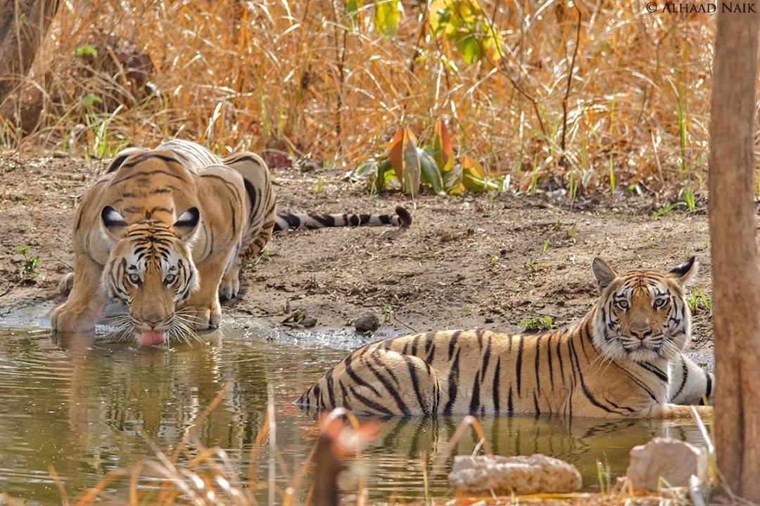 book a Jungle Stay and Safari