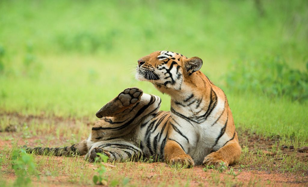 Tadoba National Park Safari Booking