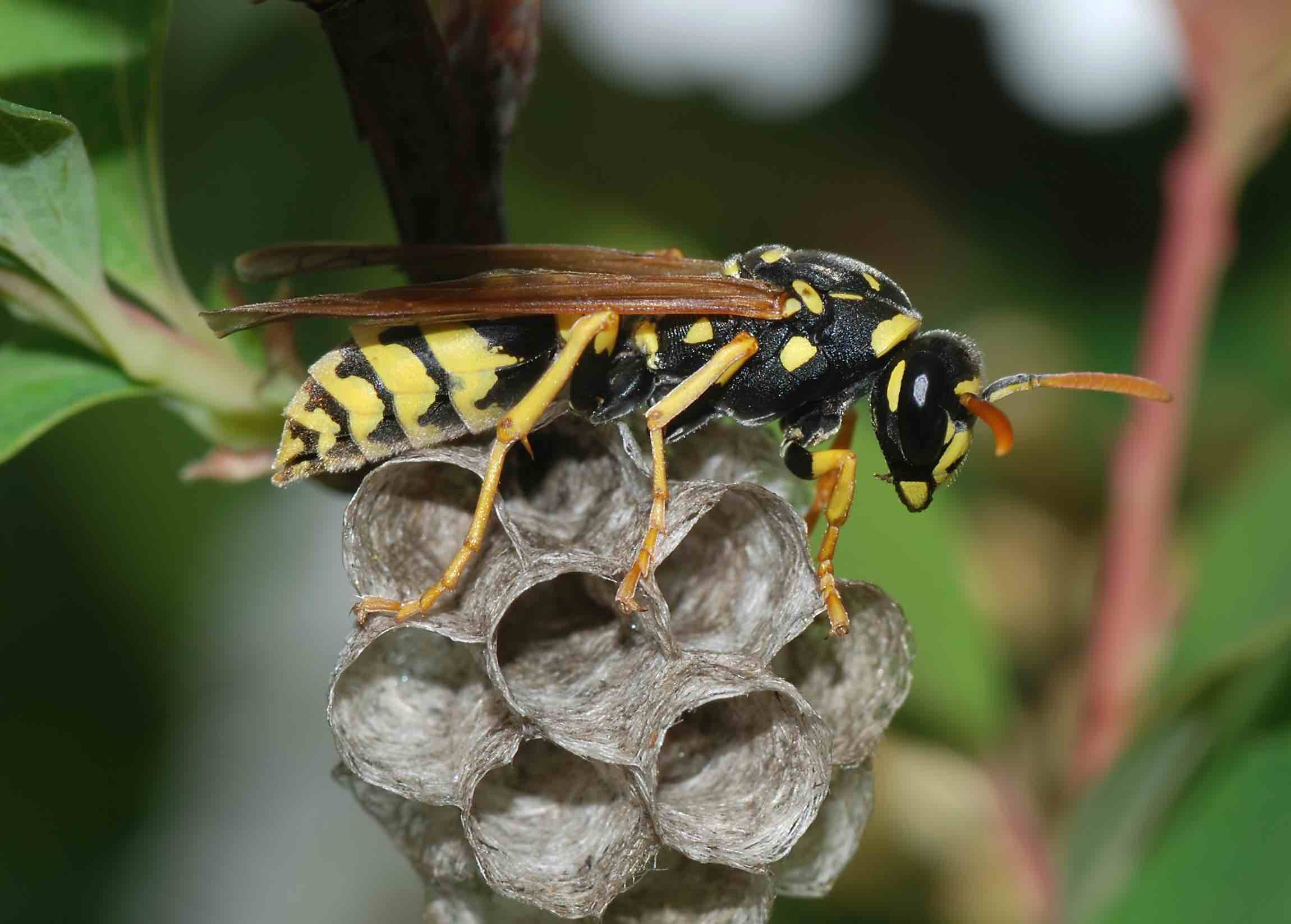 a business lesson from paper wasps