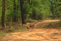Bandhavgarh Package