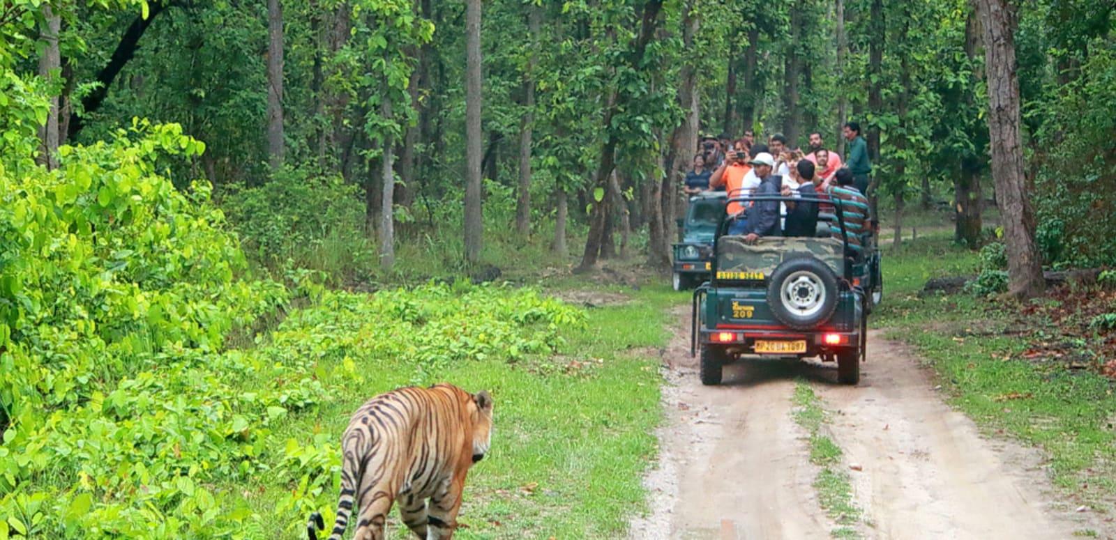 Indian Safaris explained