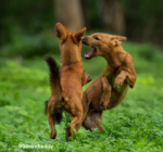 business lessons from wild dogs