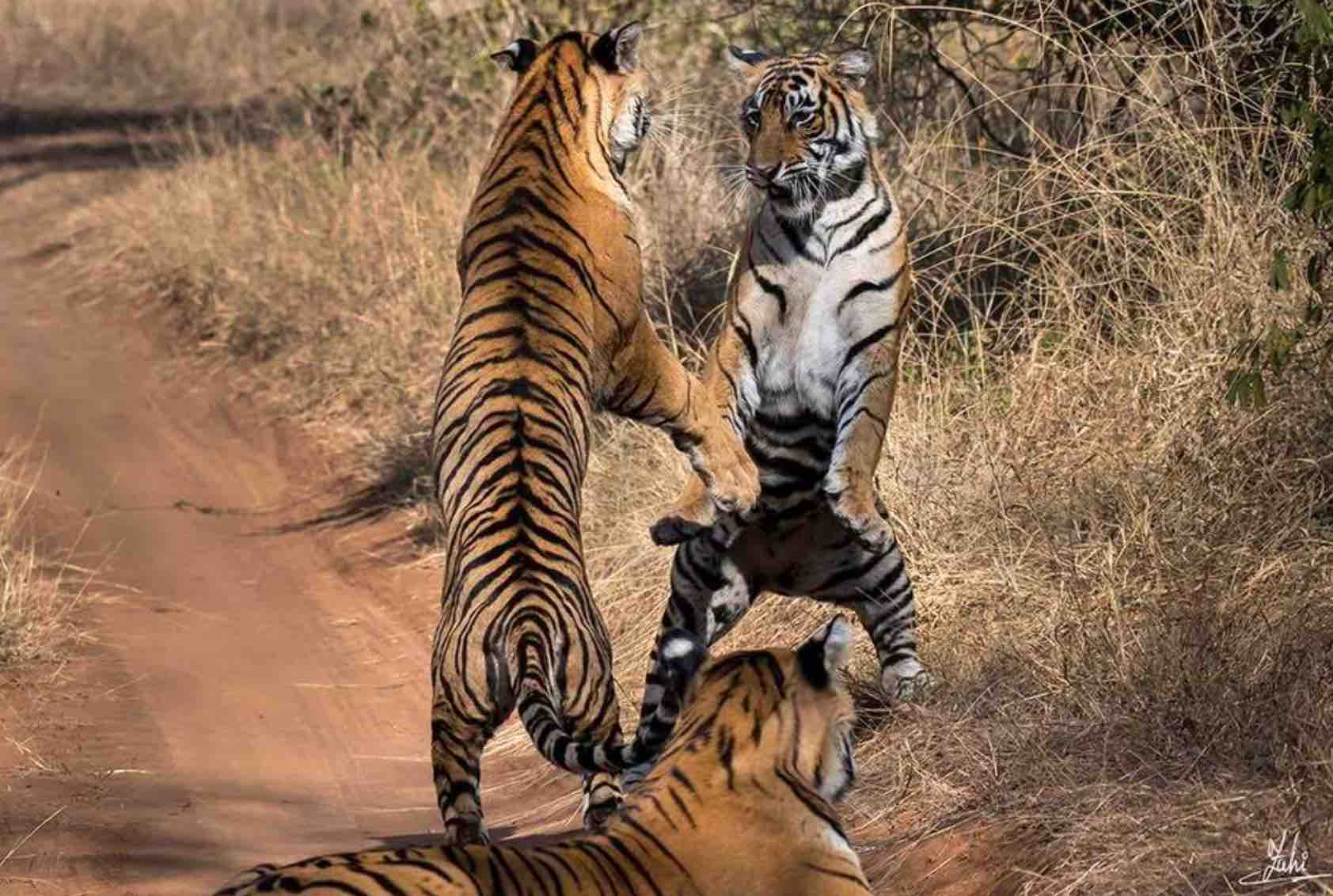 Distance between Ranthambore Safari Zones & Gates