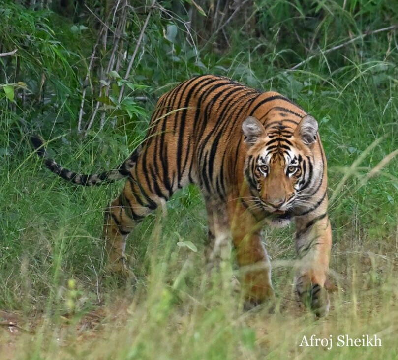 Plan Ranthambore Tiger Reserve Rajasthan from London