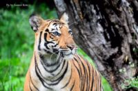 Top 10 Things to do in Ranthambore