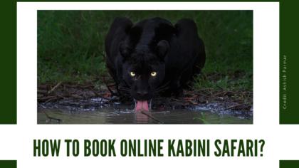 HOW TO BOOK KABINI SAFARI