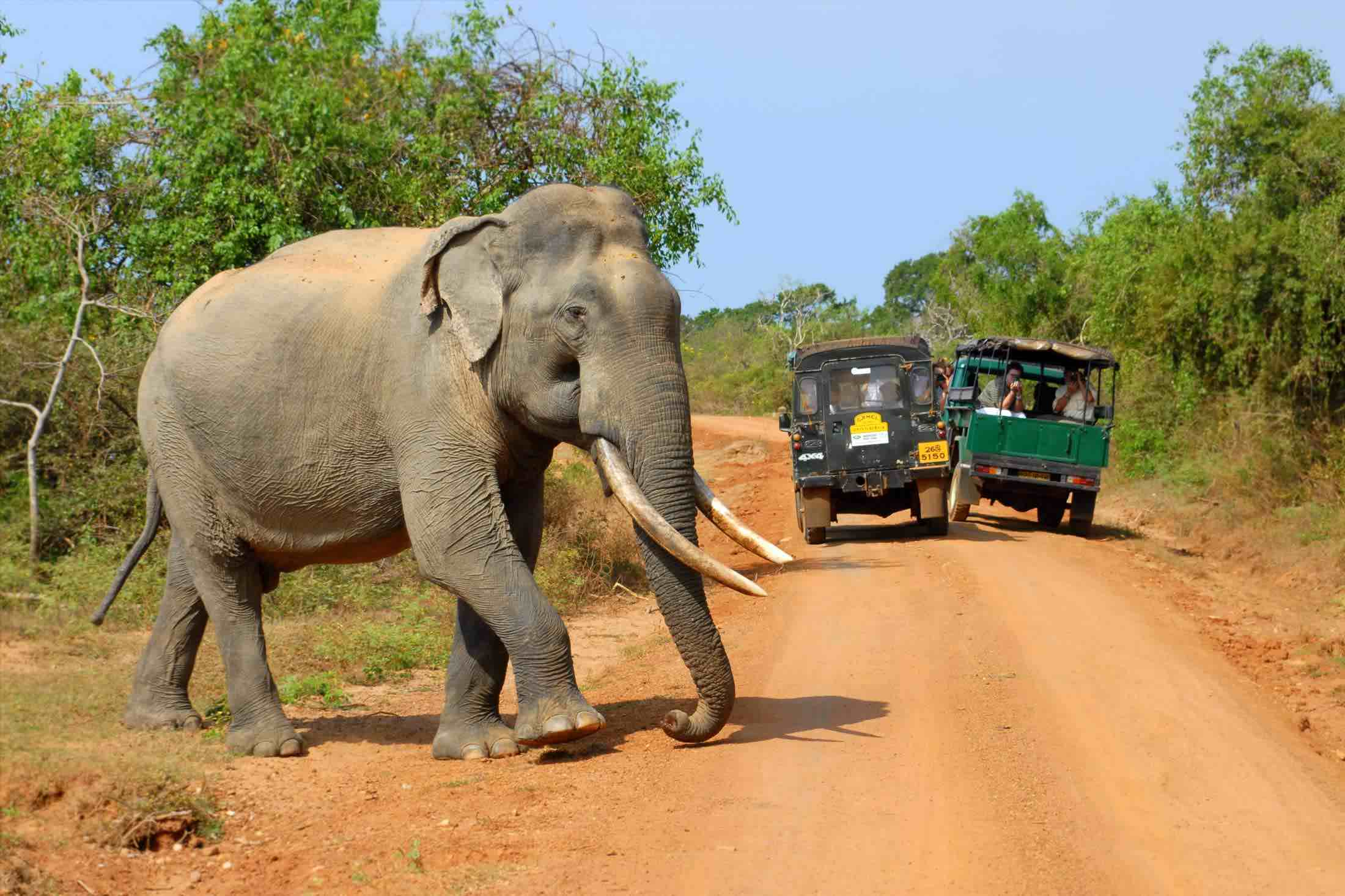 wildlife vacation