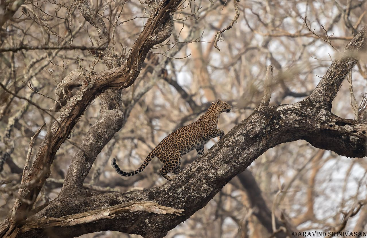 best park to see a Leopard