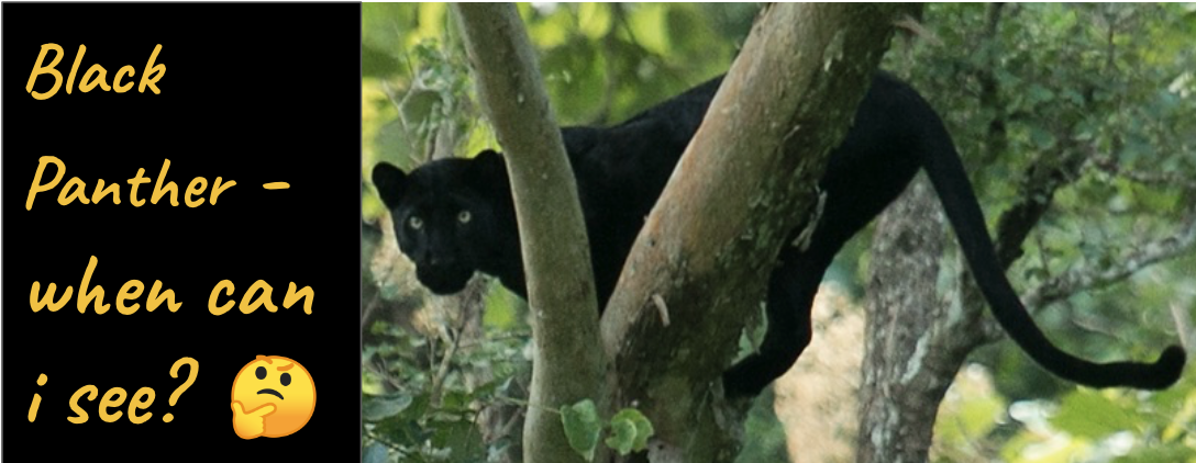 black panther at kabini