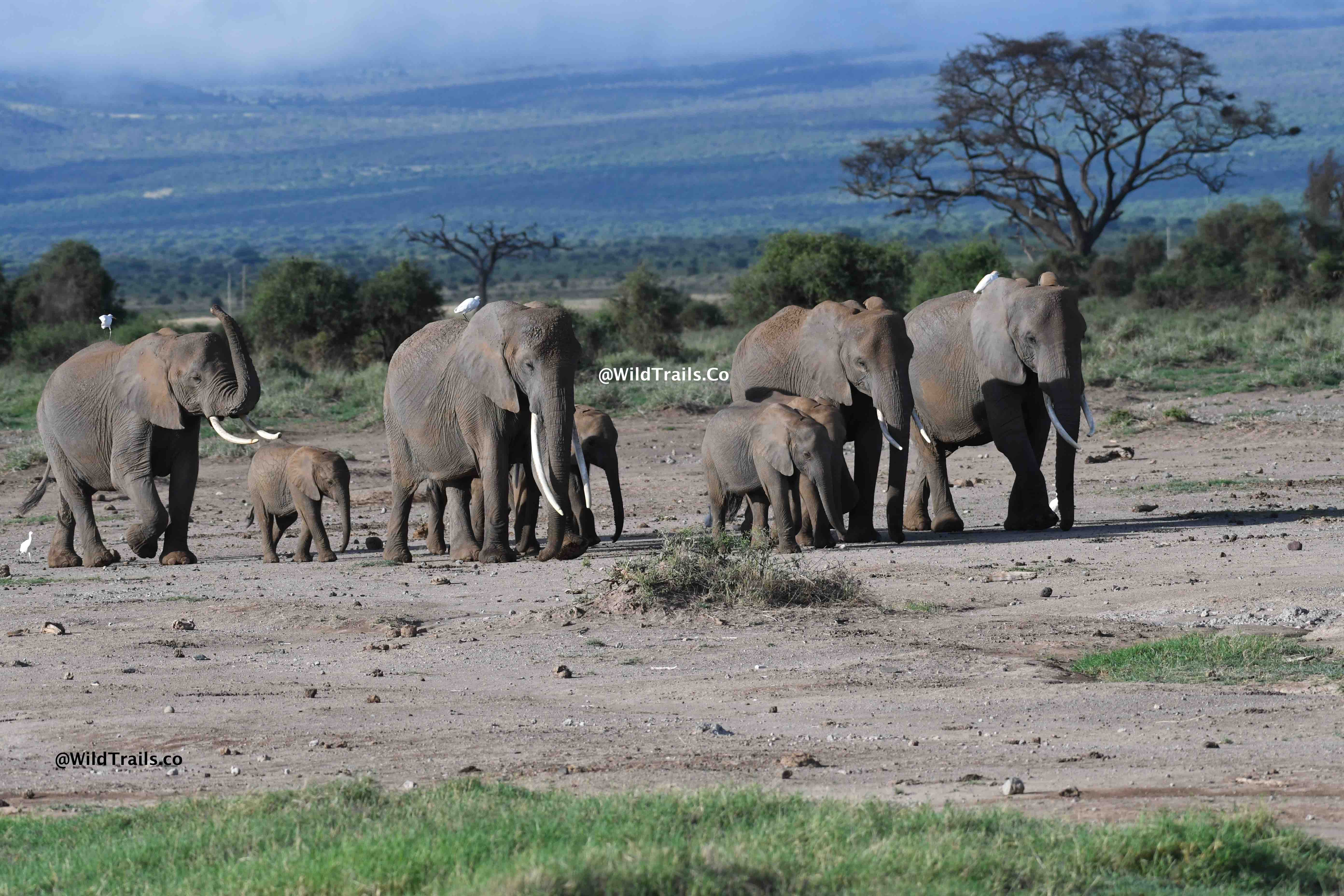 Kenya Safari for Big5 Amboseli