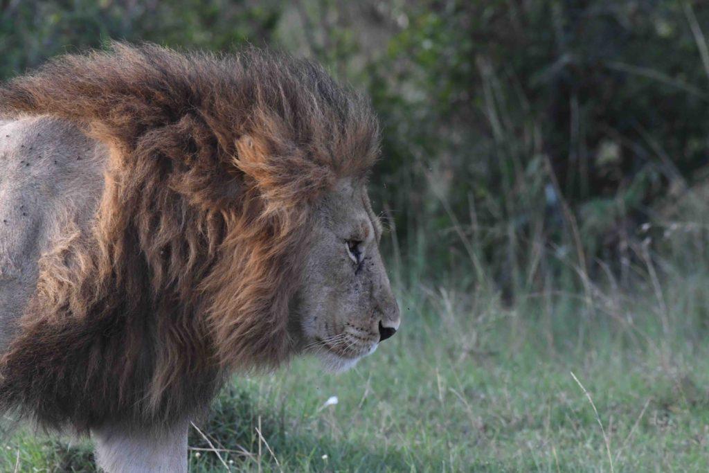 How to plan your Kenya Safari Trip?