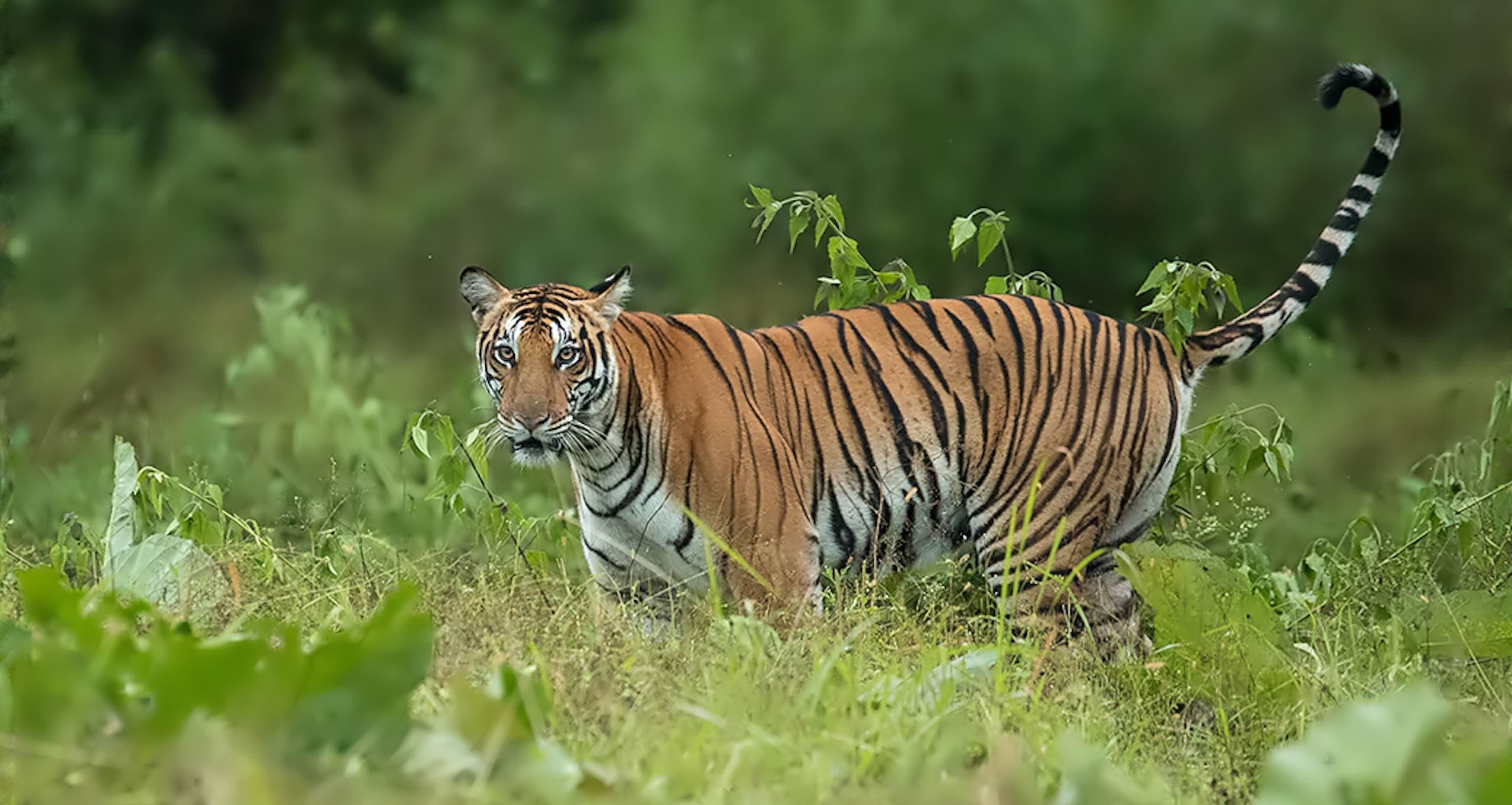 Indian Wildlife Safari during Monsoon