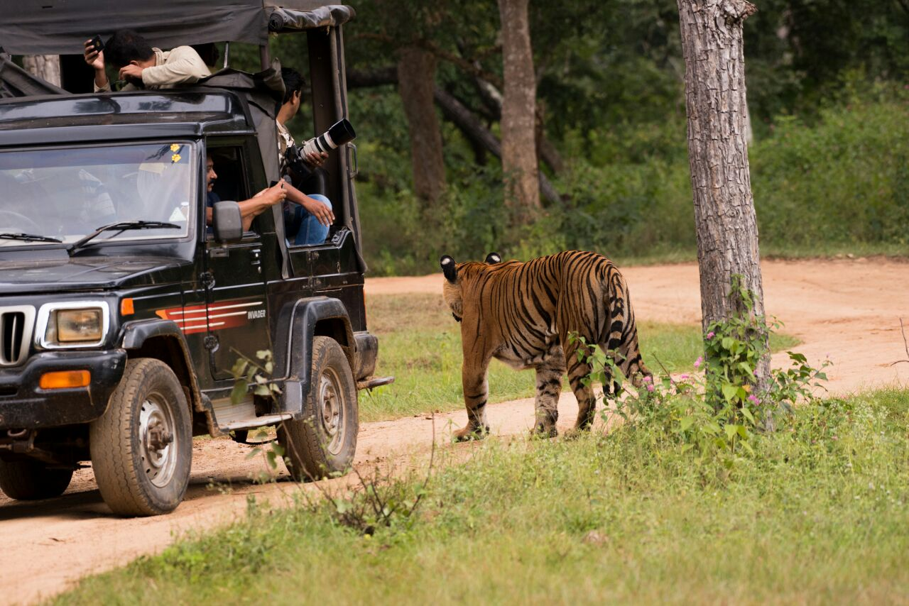 Safari Experience in Indian Jungles