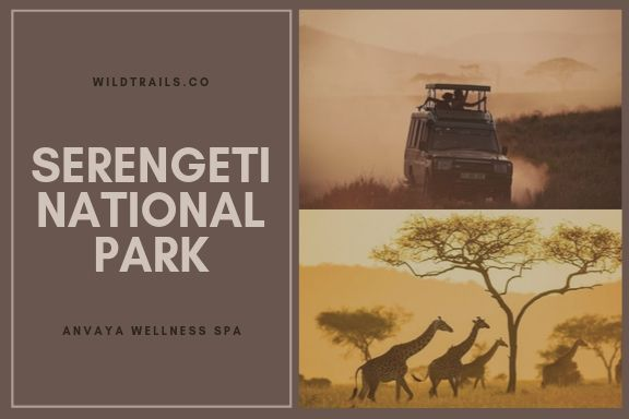 Serengeti National PARK (WildTrails.co)