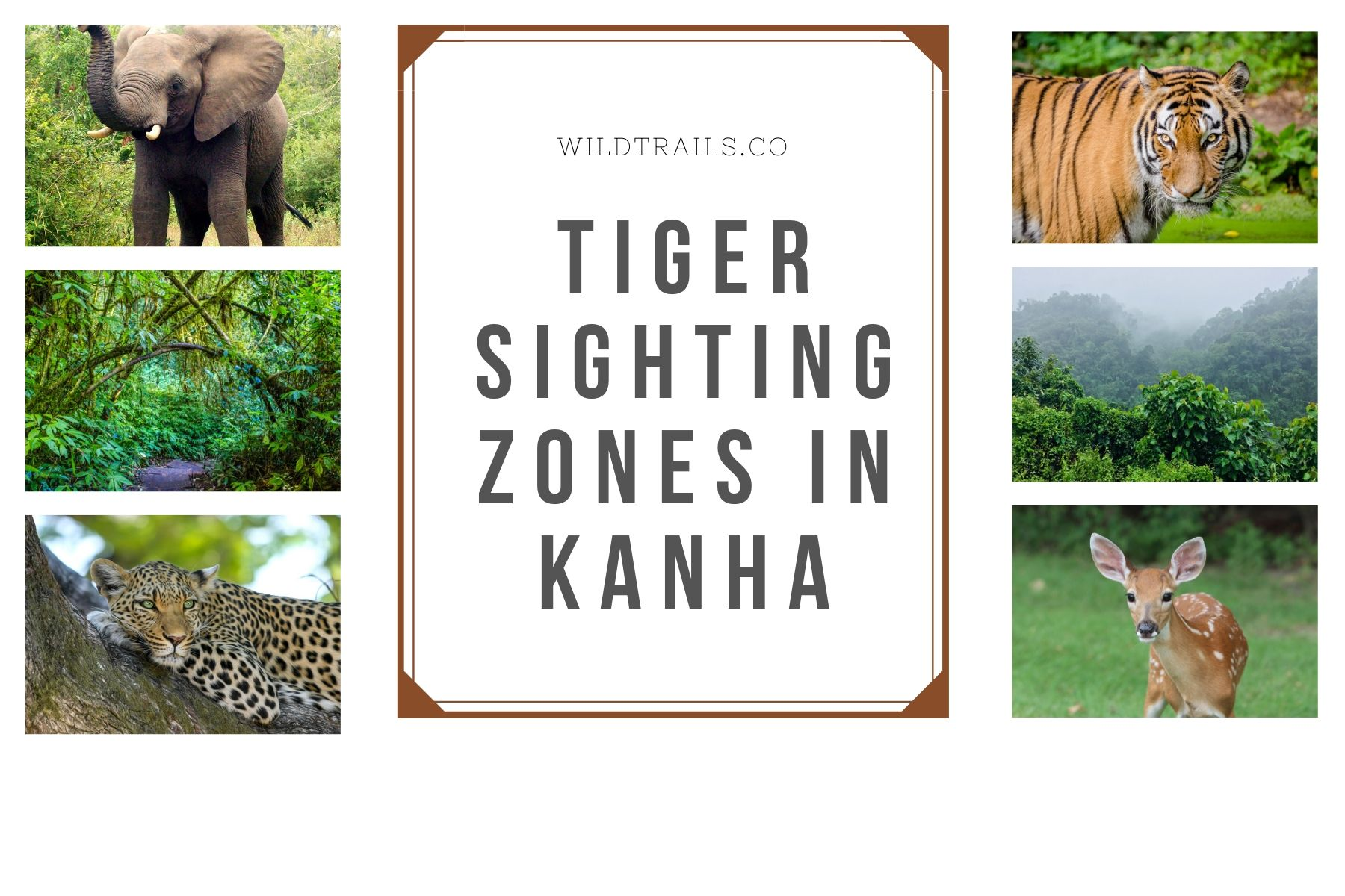 Kanha TiGERS