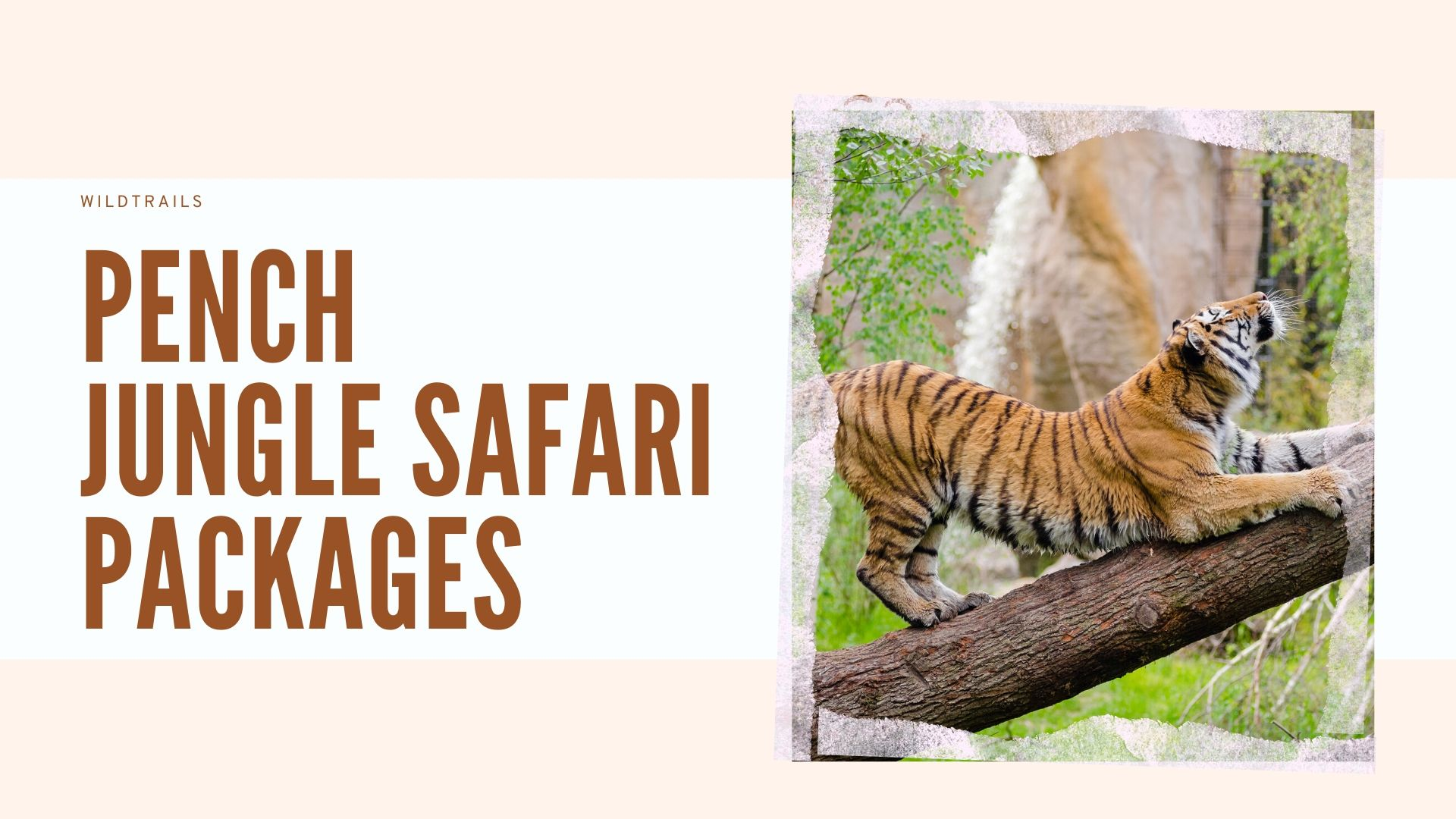 Pench Jungle Safari Packages