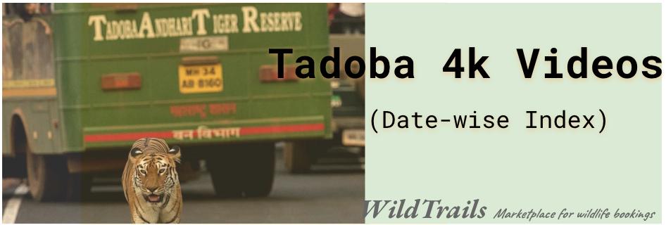 Tadoba-4k-videos-live