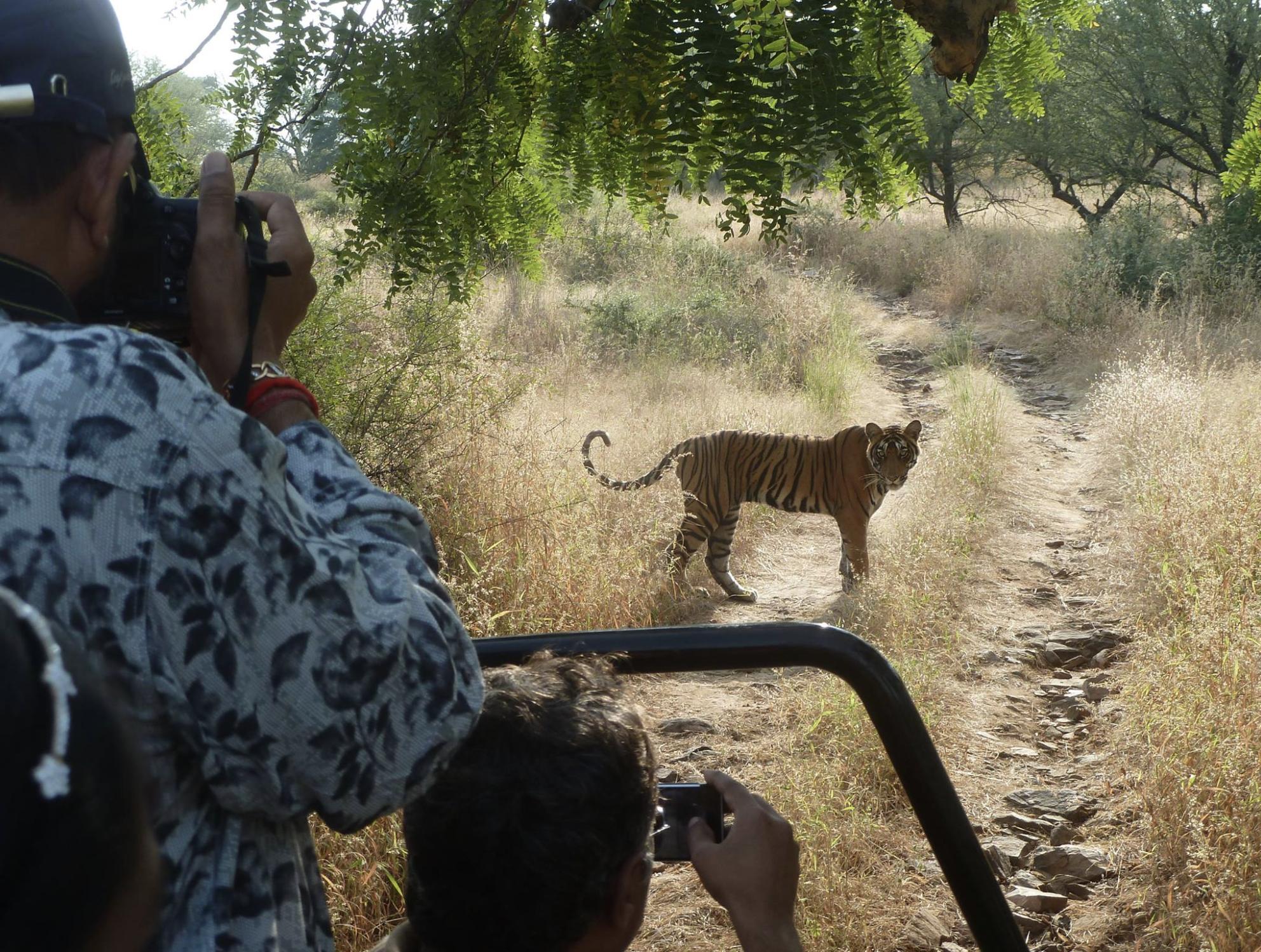 Ranthambore Safari ticket refund