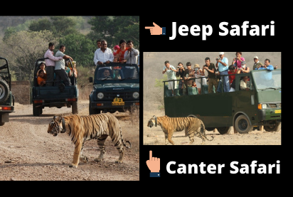 Safaris at Ranthambore