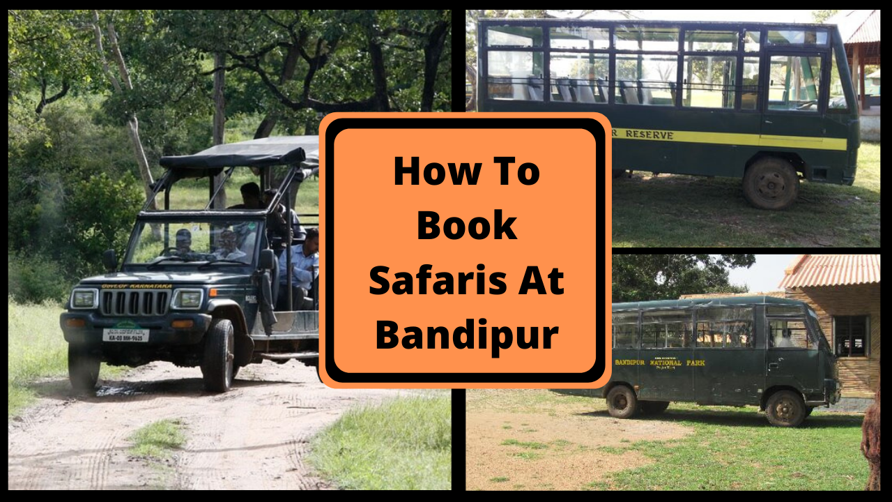 How To Book Safaris At Bandipur