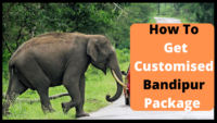 Bandipur Packages