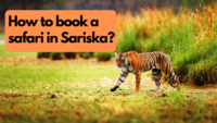 How to book a safari in Sariska?