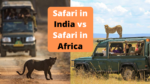 Safari in India vs Safari in Africa