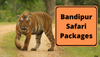Bandipur Safari Packages