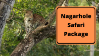 Nagarhole Safari Package