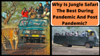 Why Is Jungle Safari The Best During Pandemic And Post Pandemic_